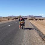 camellos marruecos moto trail