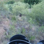 El camino trail se pierde