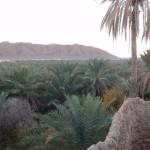Oasis y palmeras de figuig